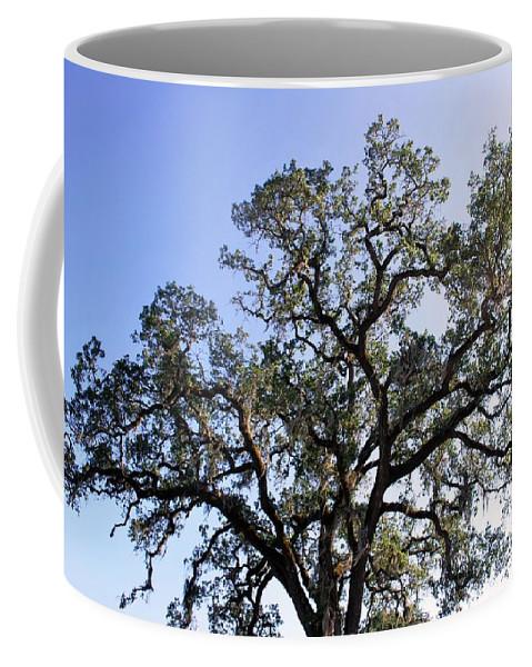 Tree Coffee Mug featuring the photograph Beautiful Tree Blue Sky Sunshine by Matt Harang