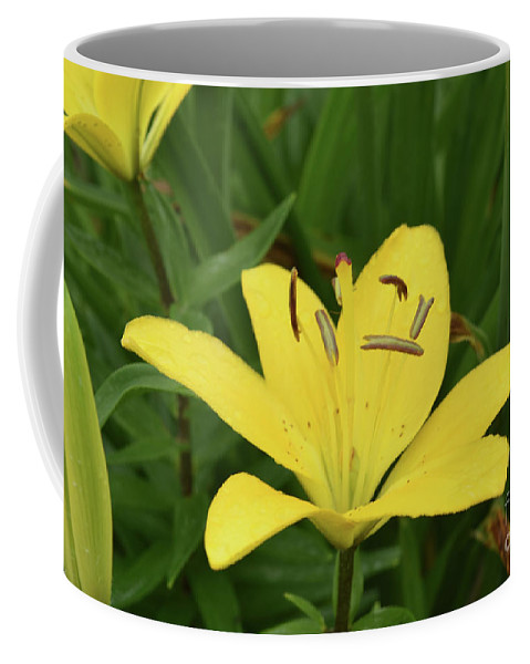 Lily Coffee Mug featuring the photograph Beautiful Yellow Lily In A Garden During Spring by DejaVu Designs