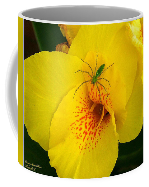 Spider Coffee Mug featuring the photograph Beauty And The Beast by Robert Meanor
