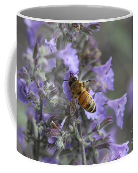Flowers Coffee Mug featuring the photograph Beauty And The Bee by Deborah Benoit