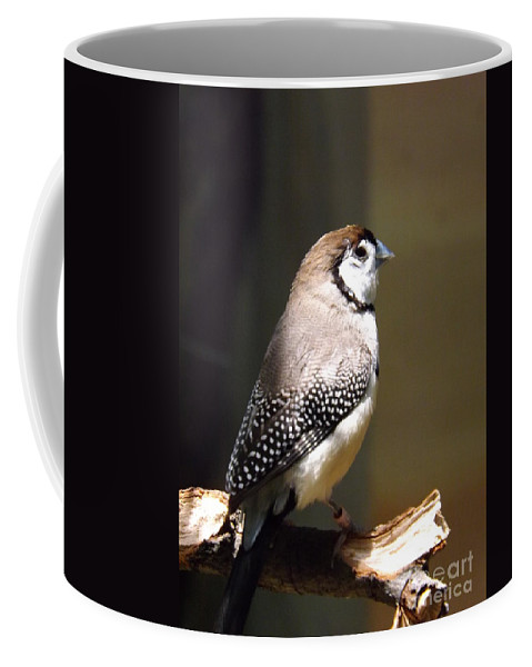 Owl Coffee Mug featuring the photograph Beauty In Light by Sara Raber