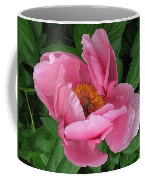 Flower Coffee Mug featuring the photograph Beauty Revealing Itself by Deborah Crew-Johnson