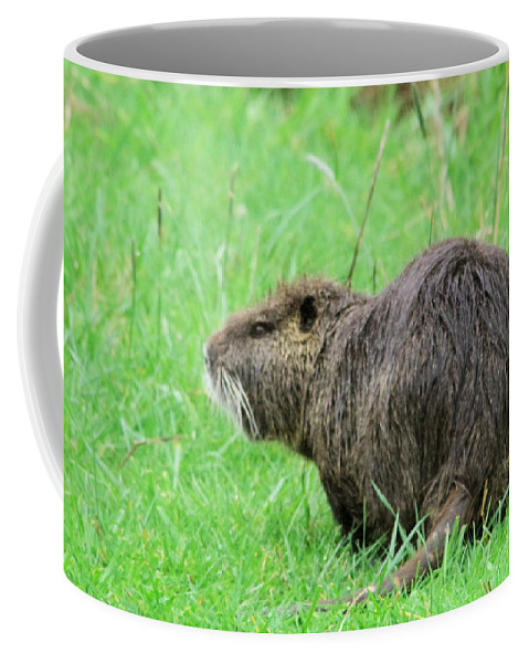Beaver Coffee Mug featuring the photograph Beaver With Whiskers by Jeff Swan