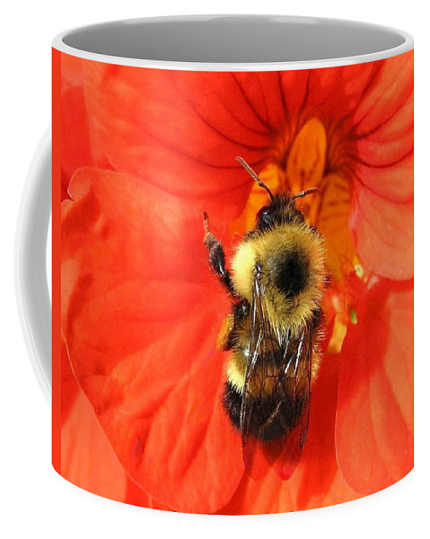 Bee Coffee Mug featuring the photograph Bee And Nasturtium by Will Borden