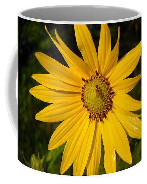 Floral Coffee Mug featuring the photograph Bee And Yellow Flower by Kent Lorentzen