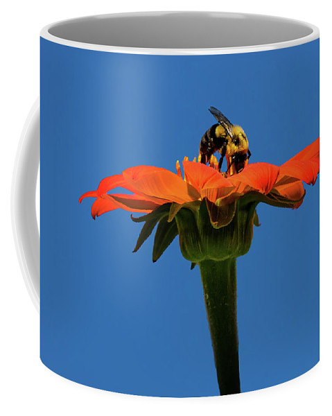 Bee Dreamsicle Coffee Mug featuring the photograph Bee Dreamsicle by Janet Ballard