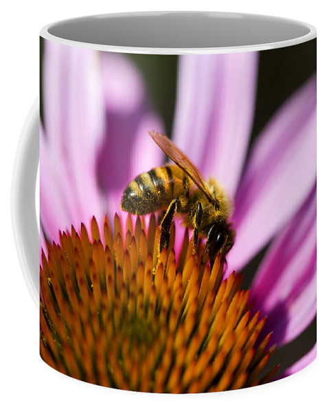 Flower Coffee Mug featuring the photograph Bee Feasting by Marilyn Hunt