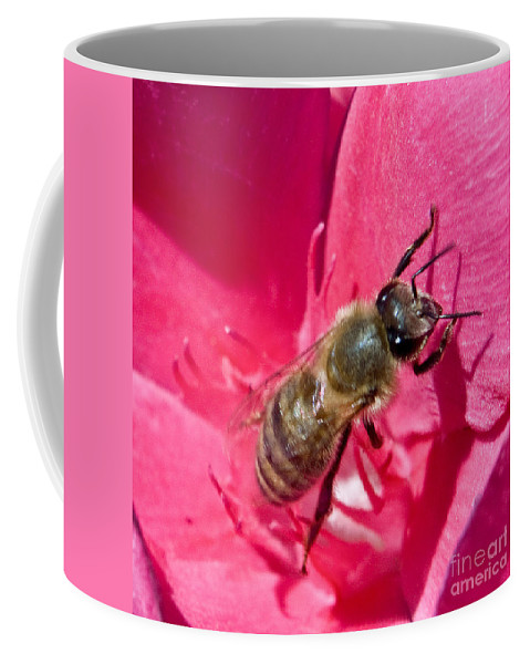 California Scenes Coffee Mug featuring the photograph Bee Mine by Norman Andrus