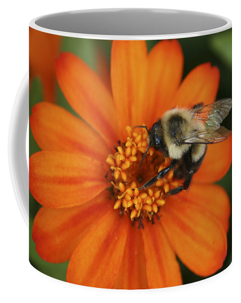 Bee Coffee Mug featuring the photograph Bee On Aster by Margie Wildblood
