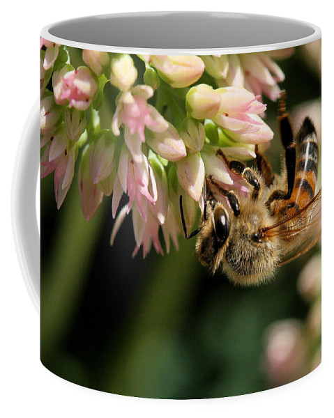 Bee Coffee Mug featuring the photograph Bee On Flower 1 by Angela Rath