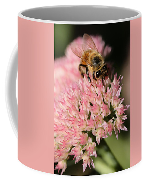 Bee Coffee Mug featuring the photograph Bee On Flower 4 by Angela Rath