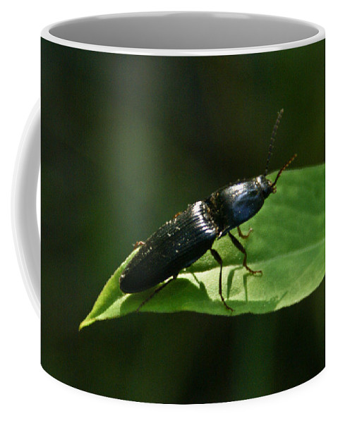 Beetle Coffee Mug featuring the photograph Beetle At Sunrise by Douglas Barnett