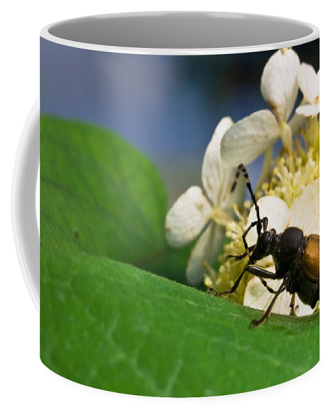 Crossville Coffee Mug featuring the photograph Beetle Preening by Douglas Barnett