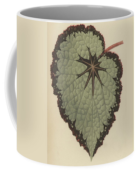 Begonia Rex Coffee Mug featuring the painting Begonia Rex, Variety Isis by English School