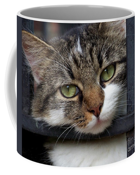 Cat Coffee Mug featuring the photograph Behind Bars by Jai Johnson