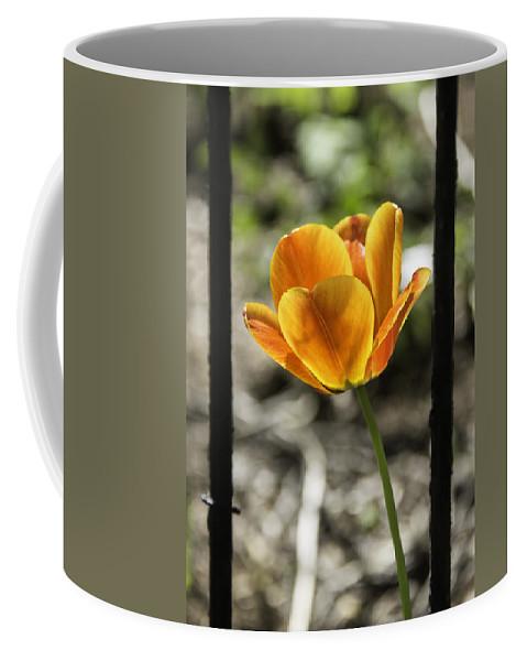 Flowers Coffee Mug featuring the photograph Behind Bars by Teresa Mucha