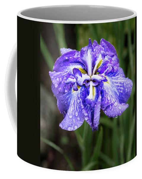 Purple Coffee Mug featuring the photograph Bellevue Botanical Garden Iris 6402 by Bob Neiman