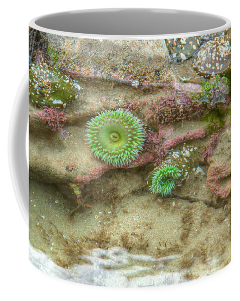Waterscape Coffee Mug featuring the photograph Below The Surface by Kristina Rinell