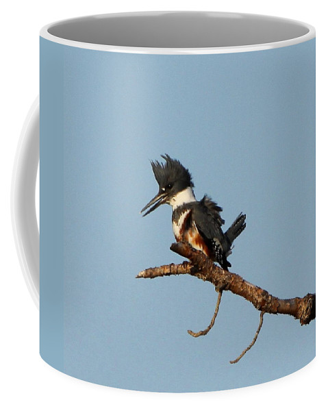 Belted Kingfisher Coffee Mug featuring the photograph Belted Kingfisher by Barbara Bowen
