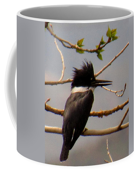 Belted Kingfisher Diving Birds Avian Predators Nevada Bird Species Nevada Biodiversity North American Bird Species Coffee Mug featuring the photograph Belted Kingfisher by Joshua Bales
