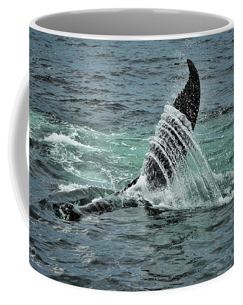 Whale Coffee Mug featuring the photograph Bending The Water by Andrea Platt