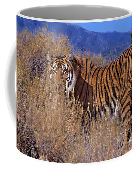 Bengal Tiger Coffee Mug featuring the photograph Bengal Tiger Endangered Species Wildlife Rescue by Dave Welling
