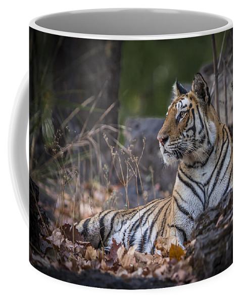 Bengal Coffee Mug featuring the photograph Bengal Tiger by Hitendra SINKAR