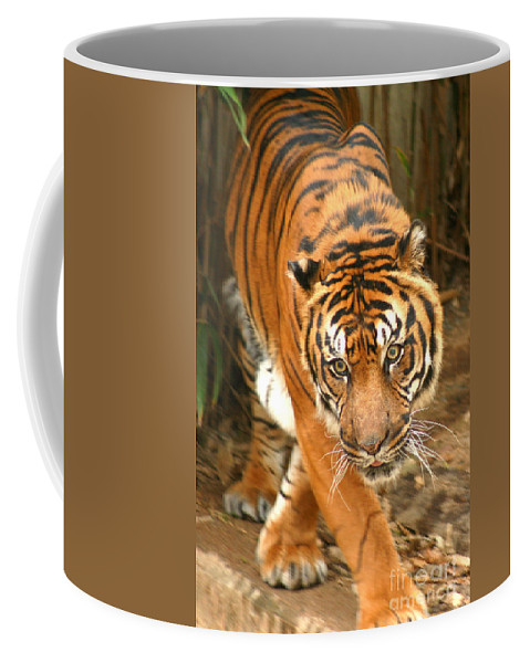 Bengal Coffee Mug featuring the photograph Bengal Tiger by Thomas Marchessault