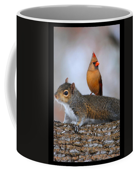 Squirrel Coffee Mug featuring the photograph Best Buds by Jai Johnson