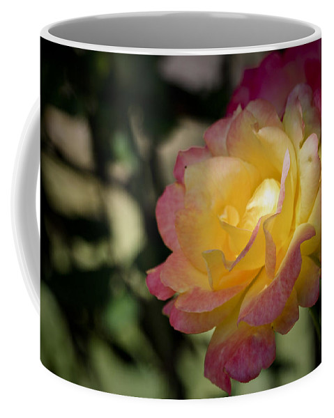 Rose Coffee Mug featuring the photograph Bettys Rose by Teresa Mucha