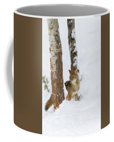 Coyote Coffee Mug featuring the photograph Between The Trees by Steve McKinzie