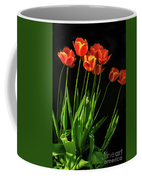 Plants Coffee Mug featuring the photograph Bicolor Tulips by Robert Bales