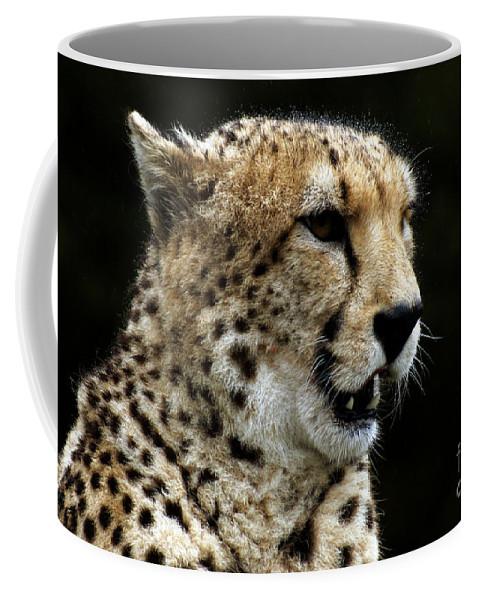 Chaeta Coffee Mug featuring the photograph Big Cats 101 by Ben Yassa