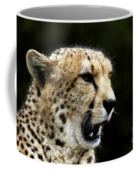 Chaeta Coffee Mug featuring the photograph Big Cats 102 by Ben Yassa