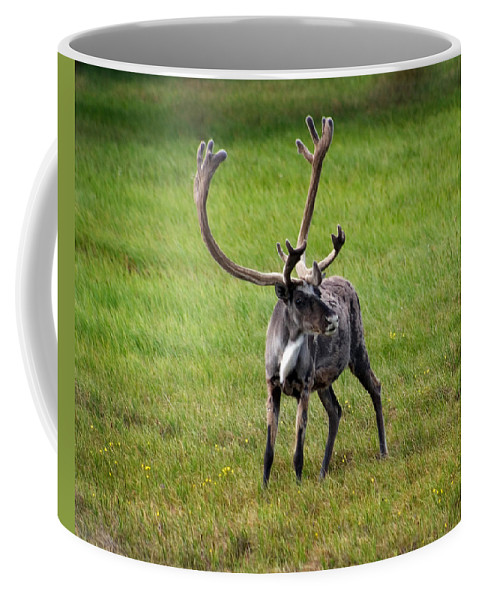 Caribou Coffee Mug featuring the photograph Big Horn by Anthony Jones