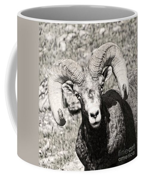 Coffee Mug featuring the photograph Big Horn Ram Bandw 5 by Russell Smith