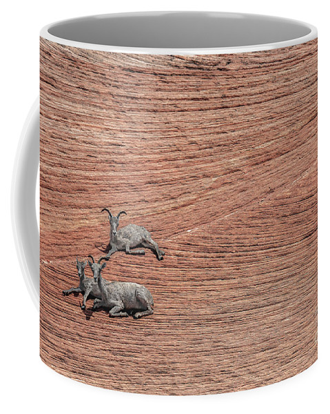 Sheep Coffee Mug featuring the photograph Big Horned Sheep Of Zion by Richard Willacy