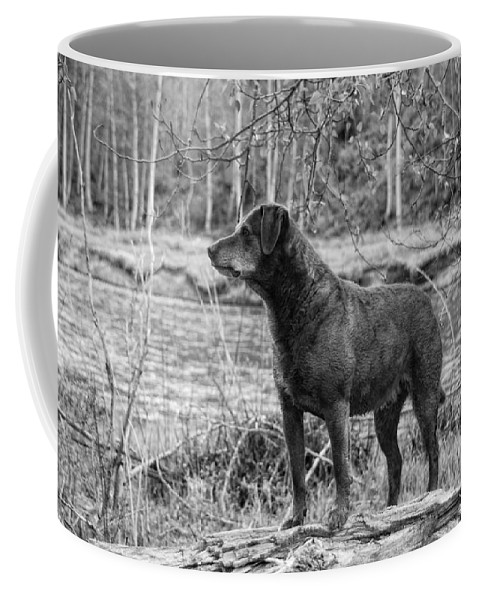 Dog Coffee Mug featuring the photograph Big Red by Donna Blackhall