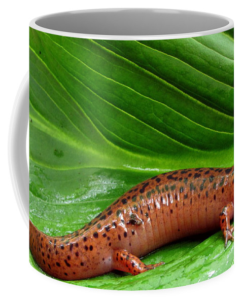 Red Spring Salamander Photographs Red Spring Salamander Canvas Prints Amphibian Nature Diversity Stream Ecology Appalachian Mountains Northern Red Salamander Images Appalachian Amphibians Appalachian Biodiversity Big Red Salamanders Of North America Natural Design Macro Nature Photography Endangered Amphibians Wildlife Stream Health Indicator Species Of Water Quality Fine Art America Prints Rare Nature Prints Rare Salamanders Coffee Mug featuring the photograph Big Red by Joshua Bales