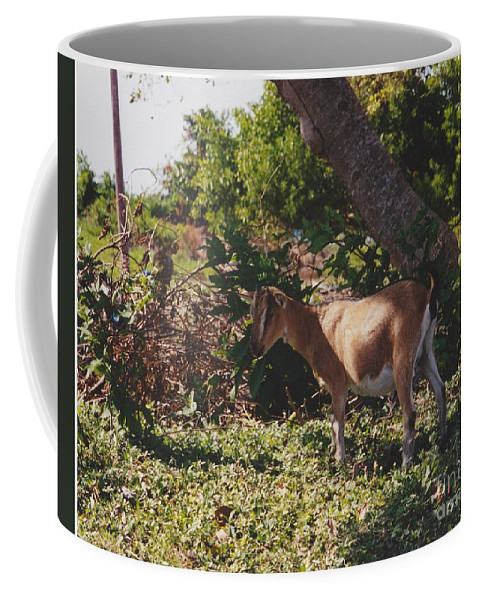 Art Coffee Mug featuring the photograph Billy Goat by Michelle Powell