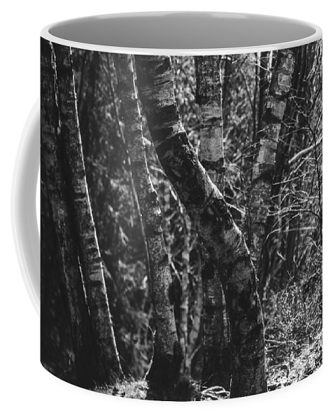 Black And White Coffee Mug featuring the photograph Birch Tree Forest by Pati Photography
