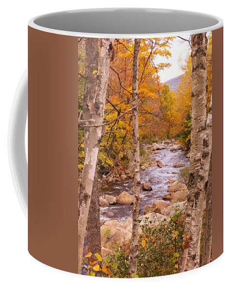 Landscape Coffee Mug featuring the photograph Birches On The Kancamagus Highway by Nancy Griswold