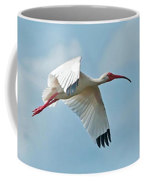Bird Coffee Mug featuring the photograph Bird In Flight by Jim Cole