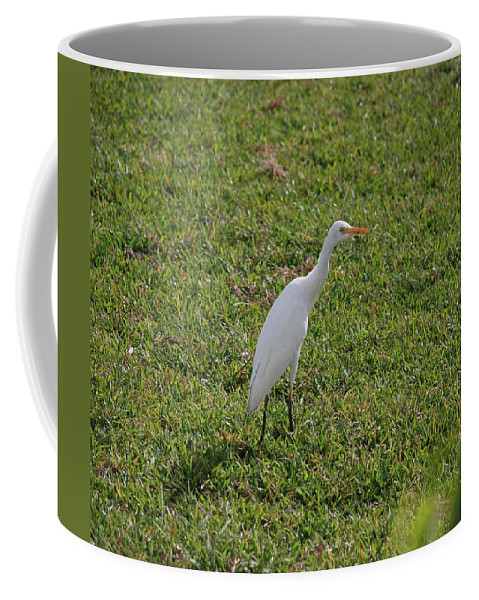 White Bird Coffee Mug featuring the photograph Bird Is The Word by Rob Hans