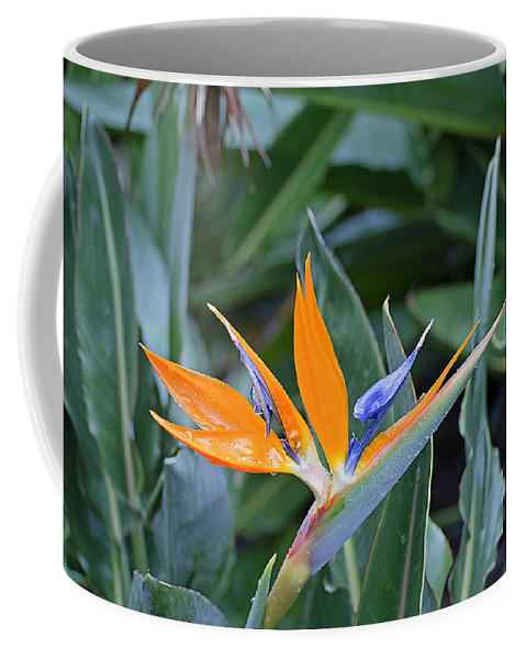 Flower Coffee Mug featuring the photograph Bird Of Paradise by Kenneth Albin