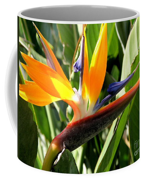 Bird Of Paradise Coffee Mug featuring the photograph Bird Of Paradise by Mary Deal