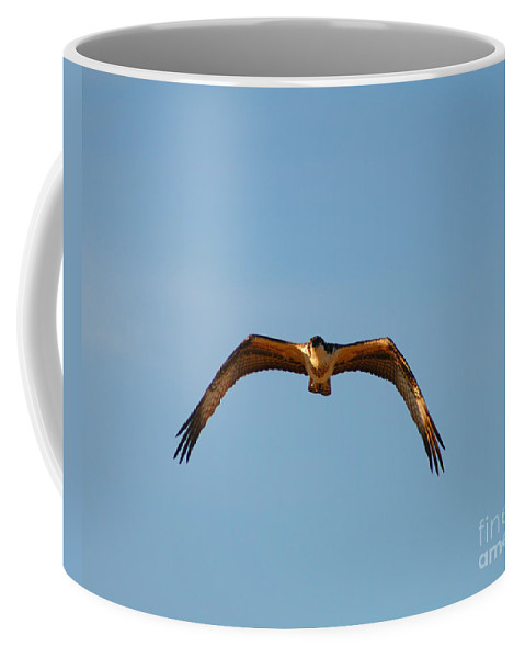 Clay Coffee Mug featuring the photograph Bird Of Prey by Clayton Bruster