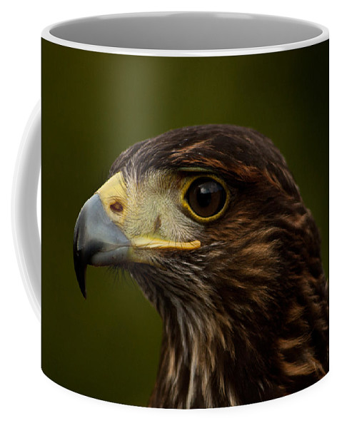 Bird Coffee Mug featuring the photograph Bird Of Prey by Dawn OConnor