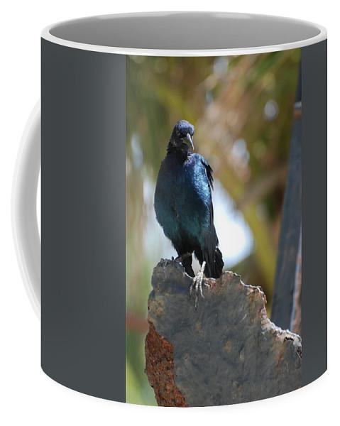 Bird Coffee Mug featuring the photograph Bird On An Anchor by Rob Hans