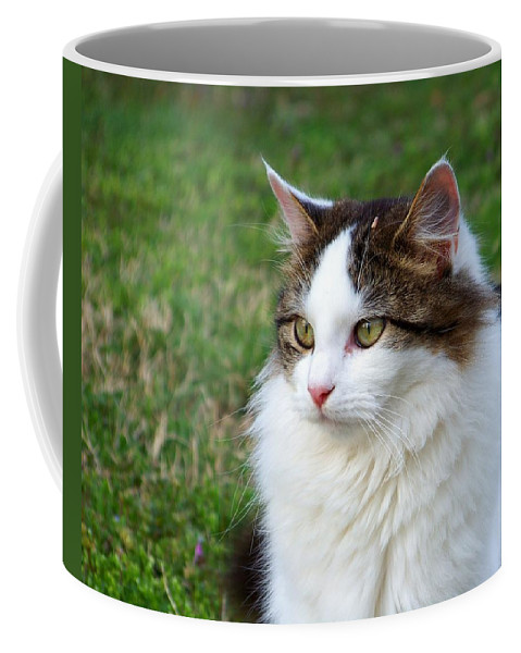 Cat Coffee Mug featuring the photograph Bird Watching by Jai Johnson